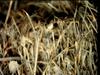 CMX - Puuvertaus