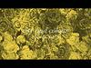 City and Colour - Captured (Big Runga cover)