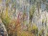 Brice Salek - Nature Sounds and Spirit Chimes Movement 4