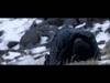 Foals - Spanish Sahara (w/ London Contemporary Orchestra)