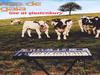 Banco de Gaia - Kincajou (Live at Glastonbury)