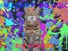 Ryan Adams - Big Colors (Visualizer)